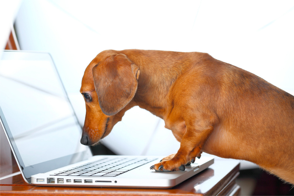 dog-on-laptop-business-concept